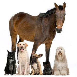 pet food sensitivity test